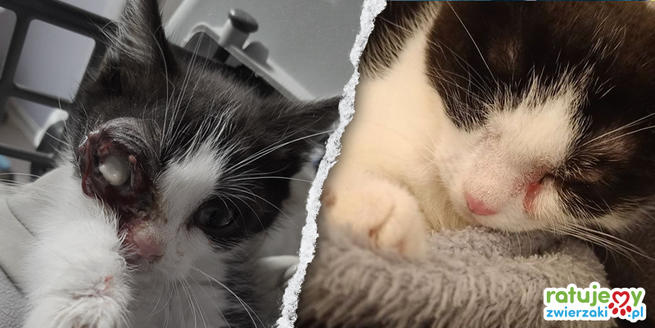 Cat before and after rescue.