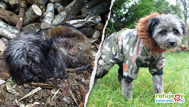 Dog before and after rescue.