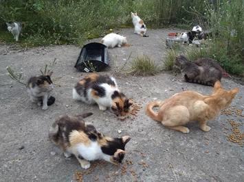 Fundacja Animal Security