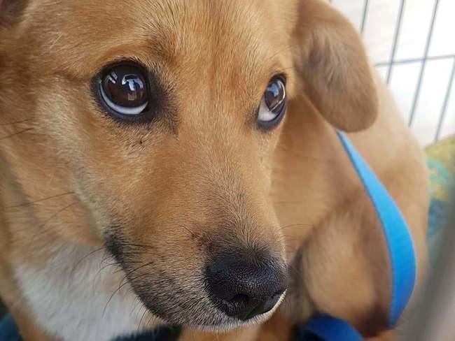 Zielony Pies - Fundacja Zwierząt Skrzywdzonych