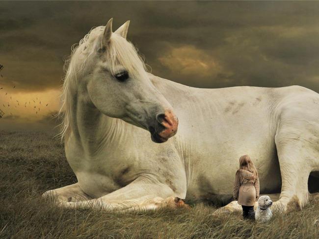 Fundacja Pegasus
