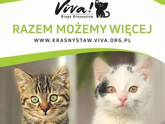 Międzynarodowy Ruch na Rzecz Zwierząt - VIVA!