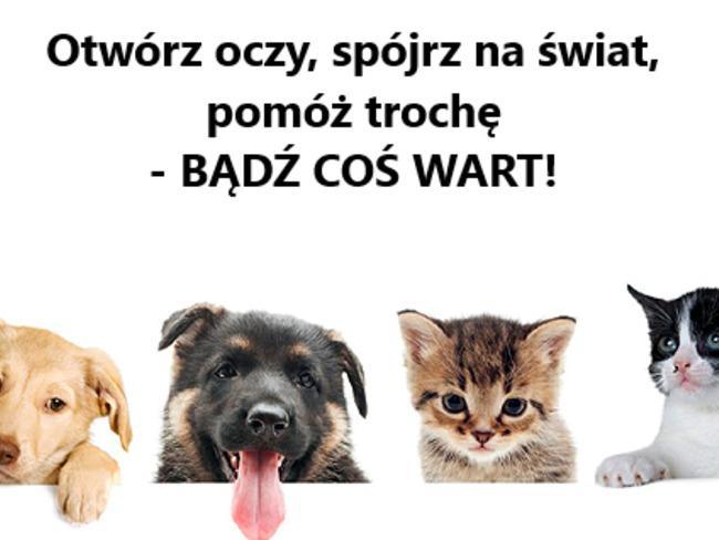 """Stowarzyszenie Pomocy Zwierzętom """"AZYL"""""""