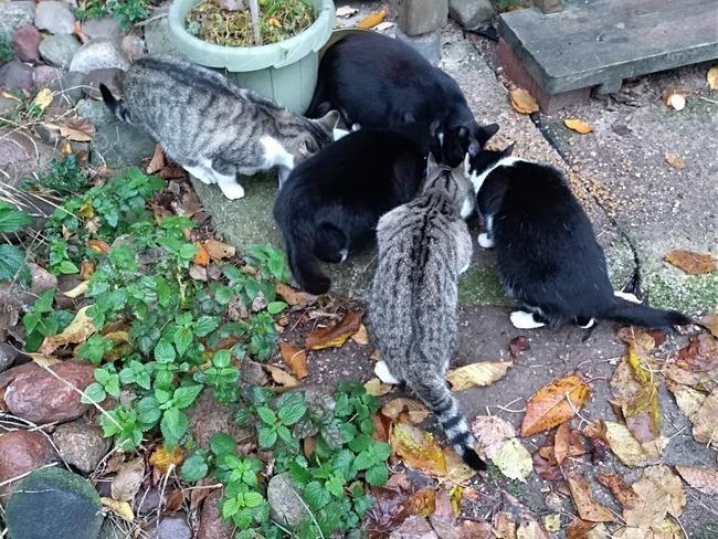 Fundacja Cat's Corner
