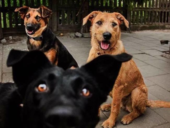 Augustowskie Stowarzyszenie Opieki Nad Bezdomnymi Zwierzętami  Kudłacz
