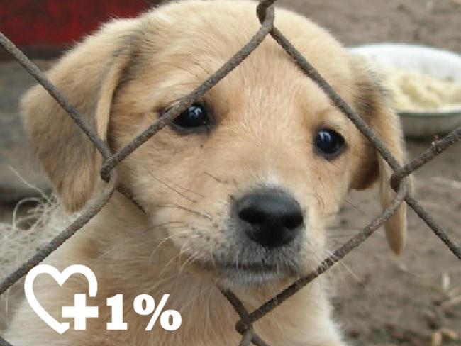 Fundacja Jak Pies z Kotem