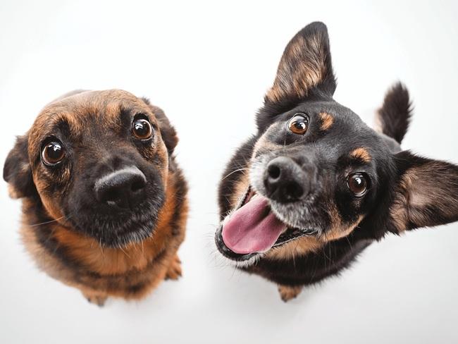 Fundacja Fioletowy Pies