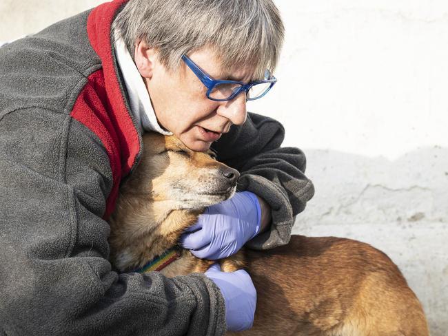 Fundacja S.O.S. dla zwierząt
