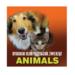 Bydgoski Klub Przyjaciół Zwierząt ANIMALS