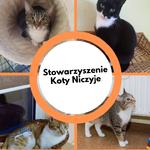 Stowarzyszenie Koty Niczyje