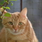 Milena Cat